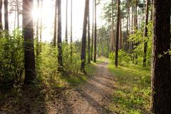 image of beautiful forest of pines and other bushes on both sides of path - stock photo