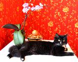 Stock Photo of black cat with an orchid