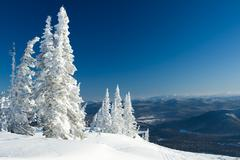 View of snow-covered trees with blue hills at background Stock Photos
