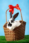 image of cute spotty rabbit in basket on green grass over blue background - stock photo