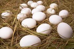 Easter background of many eggs lying in dry straw Stock Photos