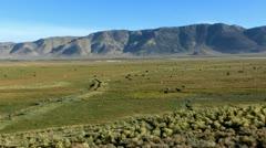 Cows 01 Hot Creek Sierra Nevada Mts Stock Footage