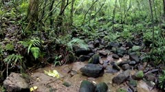Glide through pan of interior of a rainforest in Ranomafana, Madagascar. - stock footage