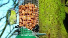 Garden Birds Feeding Stock Footage