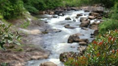 Rushing water through a rainforest in Madagascar (foreground elements in focus). - stock footage