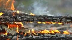 burning tree - Stock Video - stock footage