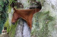 A horse in a cave Stock Photos