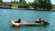 Sea lions on platform Stock Footage