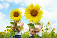 Portrait of cute girls hiding behind sunflowers on sunny day Stock Photos