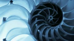 Close up of a split nautilus shell Stock Footage