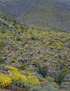 Spring in mojave desert Stock Photos