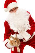 photo of happy santa claus holding fluffy rabbit - stock photo