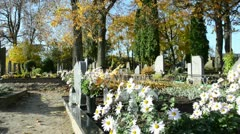 Marguerite flower grow grave cemetery autumn tree branch move Stock Footage