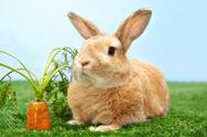 Stock Photo of image of cute rabbit on green grass with carrot near by