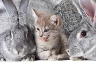 Image of cute kitten between two grey rabbits Stock Photos