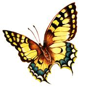 painting of bright machaon butterfly over white background - stock illustration