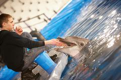 chelyabinsk – january 21: porpoise show january 21, 2010, traveling dolphinarium - stock photo