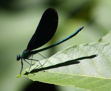 Green dragonfly on a leaf- the beutiful mini world of insects - stock photo