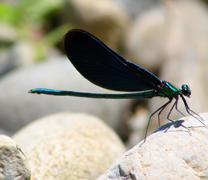 Blue dragonfly-world of insects Stock Photos