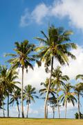Below view of beautiful palms with with bright blue sky above Stock Photos