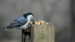Winter Birds - stock footage