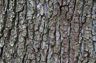 Stock Photo of tree bark texture