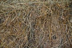 hay texture - stock photo