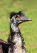Bizarre ostrich bird head Stock Photos
