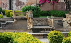 apes at bundi palace - stock photo