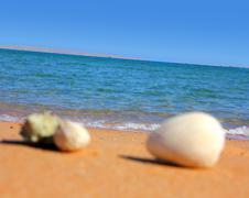 defocused seashells on beach - stock photo