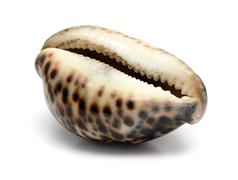 Bizarre sea shell close-up Stock Photos