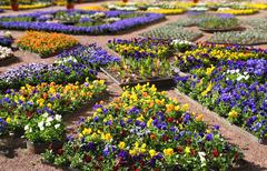 Multicolour flower beds Stock Photos