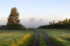 Rural rod leading to fog Stock Photos