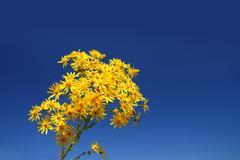 Yellow flower bunch Stock Photos