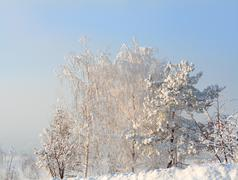 Snow trees in frosty day Stock Photos