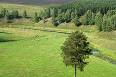Summer pasture in mountains Stock Photos