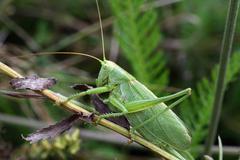 Grasshopper on grass Stock Photos