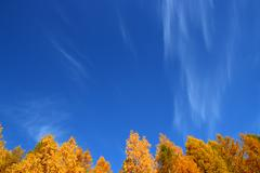 Background with tops of autumn trees under sky Stock Photos