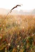 Spider web with dew drops Stock Photos