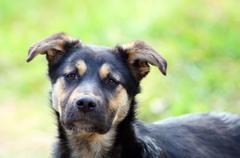 young pitiful stray dog - stock photo