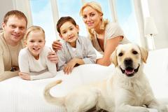 A big dog lying on sofa, a family of four standing behind Stock Photos