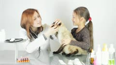 Veterinarian examines teeth  Cat Stock Footage