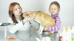 Veterinarian examines puppy Stock Footage