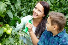 woman and little boy taking care of tomatoes in the greenhouse - stock photo