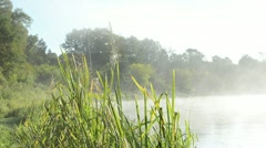 spider web on misty fogy river shore flora. - stock footage