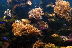 Tropical aquarium 1 Stock Photos