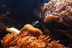 Tropical aquarium with corals Stock Photos