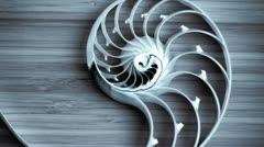 split nautilus shell on a bamboo board - stock footage