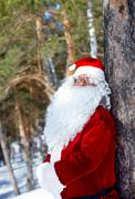 portrait of santa claus in the wood by the tree - stock photo