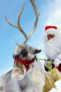cute reindeer and santa claus behind - stock photo